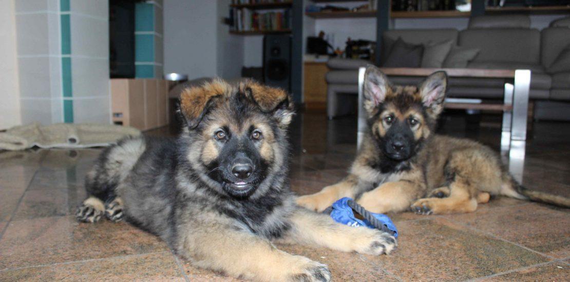 Donna und Enzo